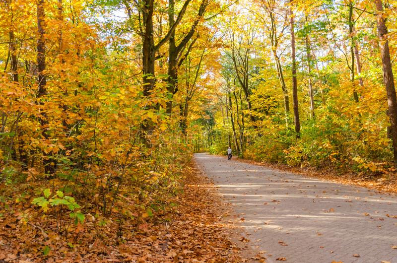 Pathway through the autumn forest. Autumn forest nature background royalty free stock photography