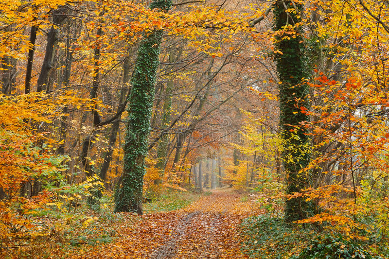 Pathway in autumn park royalty free stock photography