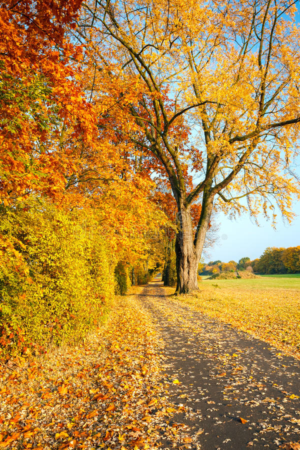 Download Pathway in the autumn park stock image. Image of brown - 26055343
