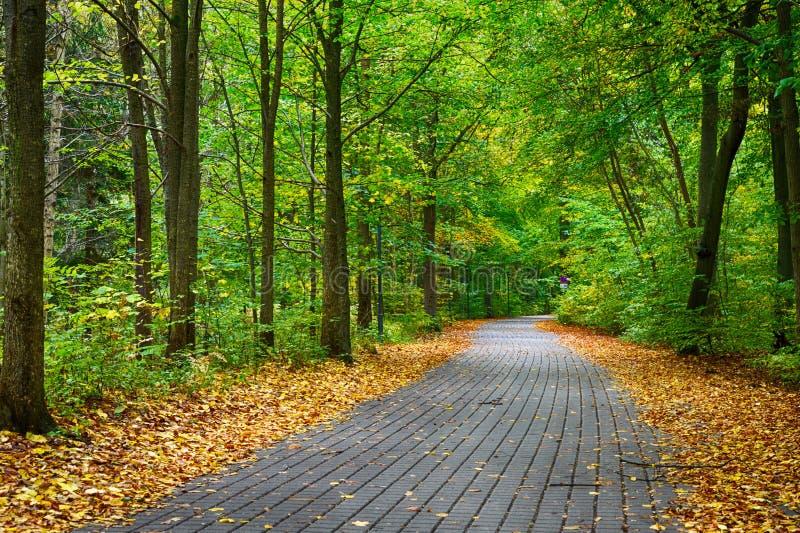 Pathway. Through the autumn park stock photo