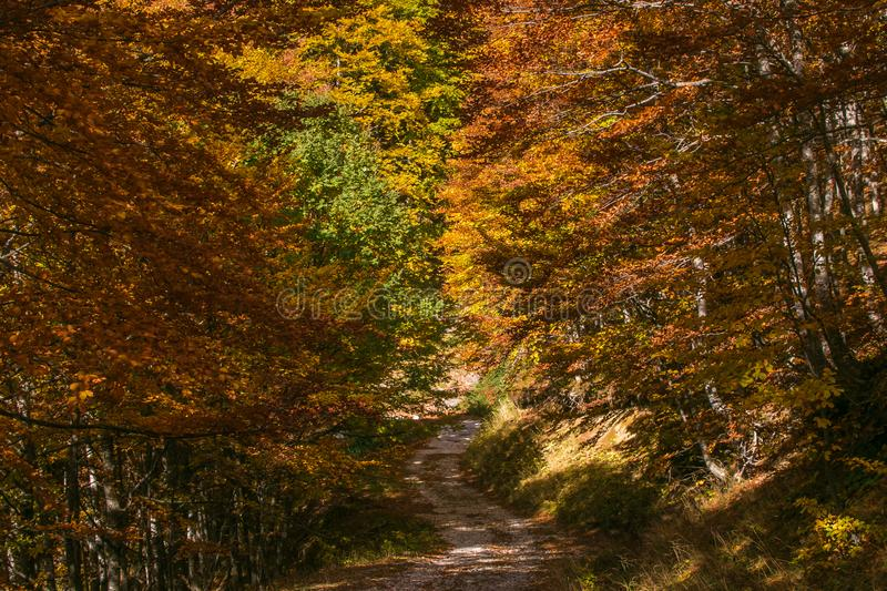 Pathway in the autumnal forest in the Abruzzo mountain. Italy stock photo