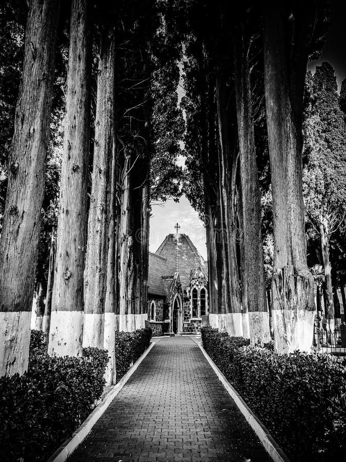 Pathway Through Cathedral Surrounded by Trees in Grayscale Photography royalty free stock images