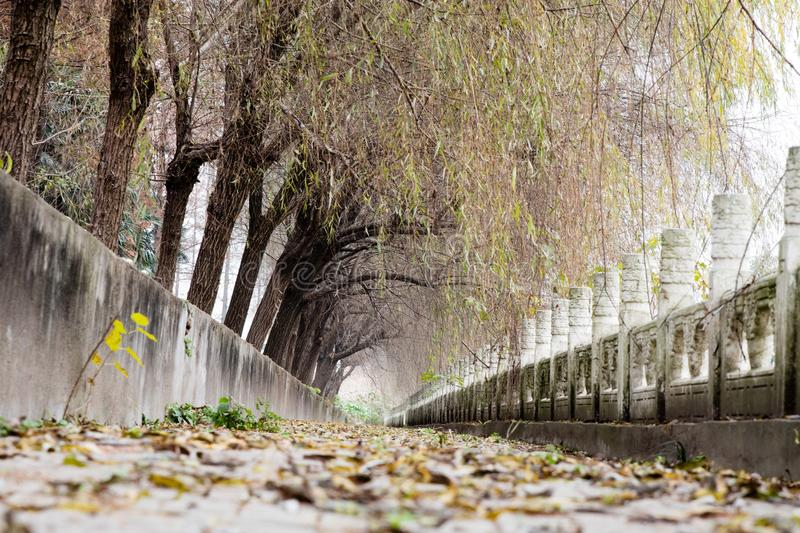 A pathway with dry fallen leaves royalty free stock photo
