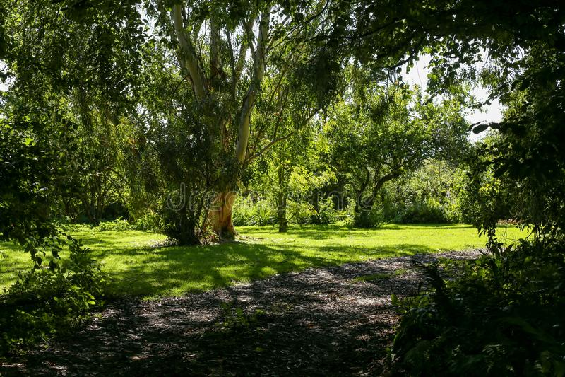 Pathway in a garden park, spring season stock photo
