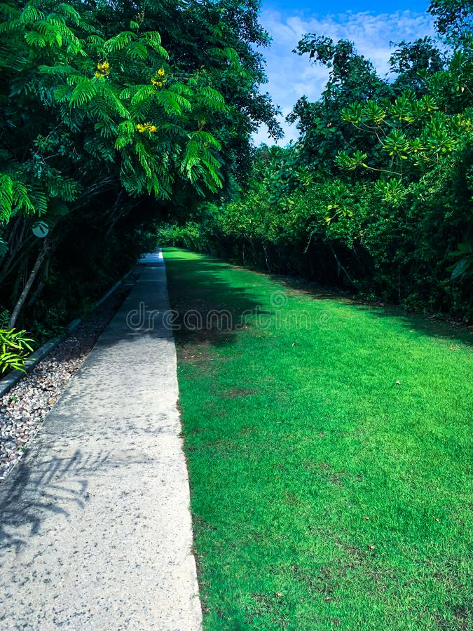 Pathway in the garden, stepping stones in the grass lawn royalty free stock photography