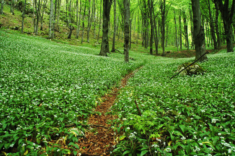 Download Pathway in green forest stock image. Image of road, growth - 15161515