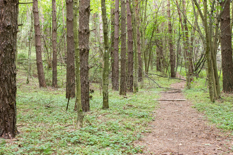 Pathway Through The Green  Forest Royalty Free Stock Photography