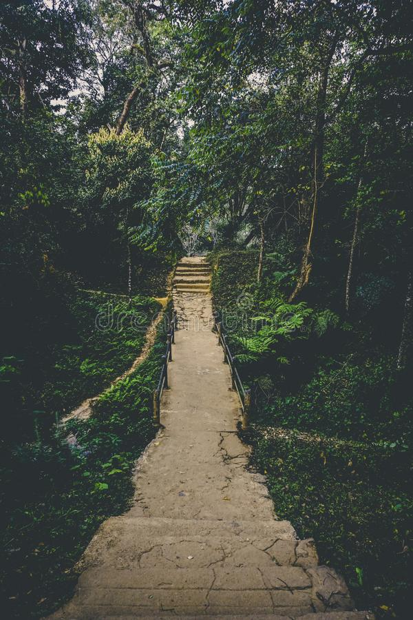 Pathway in Between of Green Leaf Trees Photo stock photo