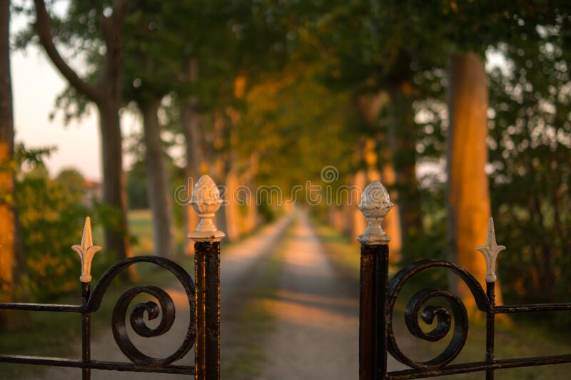 Pathway Between Green Trees Brown Steel Gate during Daytime stock photo