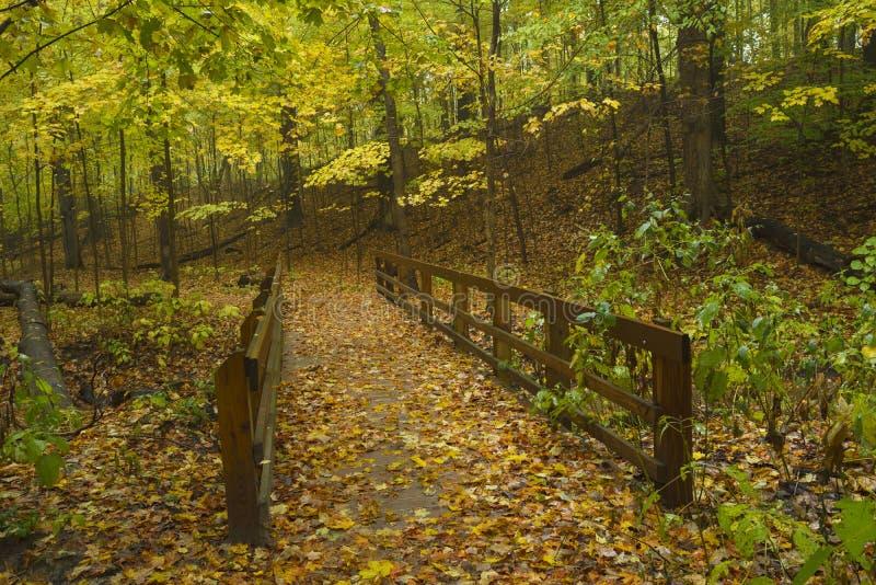 Pathway through hardwood forest in autumn. stock photo