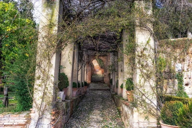 Pathway among hedge and vines in Generalife. Pathways among the hedges and vines in the gardens of Generalife. Alhambra Palace, Granada, Spain stock photo
