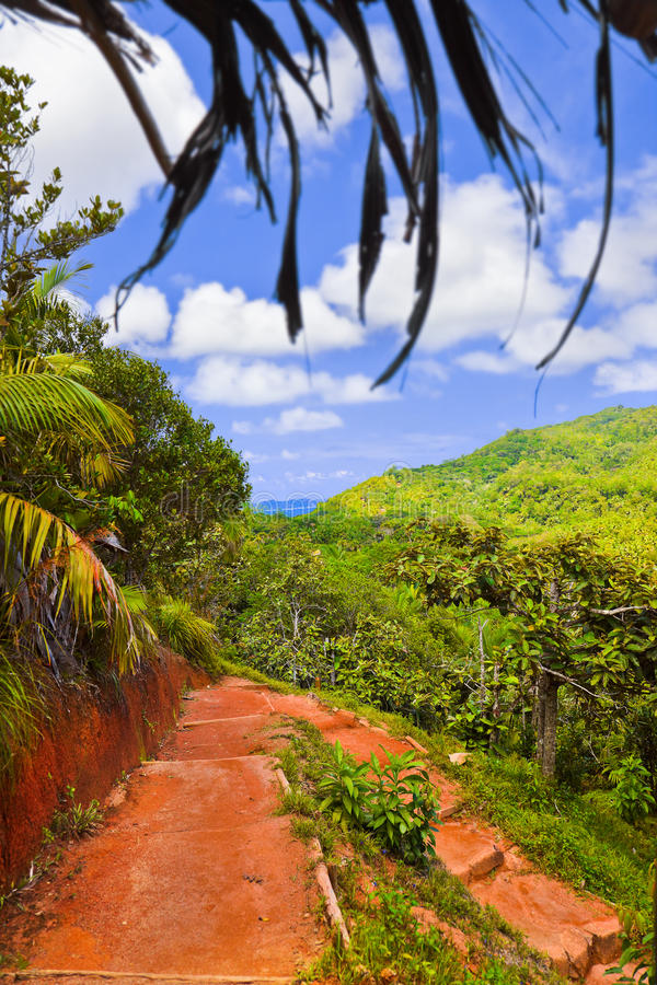 Free Pathway In Jungles, Vallee De Mai, Seychelles Royalty Free Stock Photo - 22984945