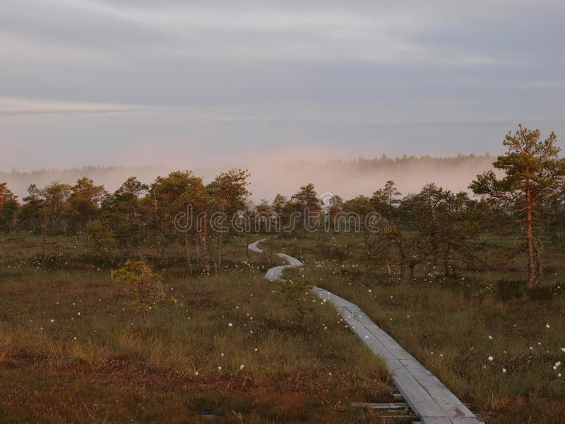 Pathway in the Kakerdaja Bog stock image