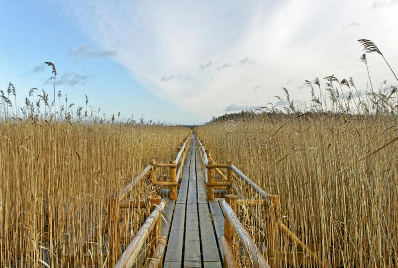Pathway on the lake. royalty free stock photos