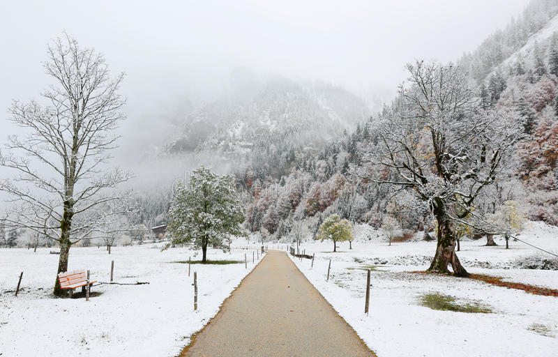 A pathway through the meadow with maple trees covered by first snow on a foggy gloomy morning royalty free stock image