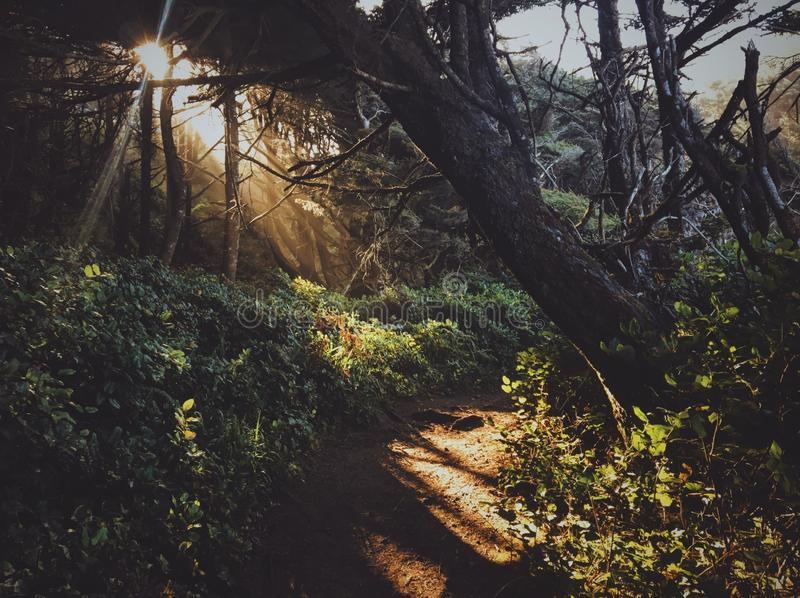 Pathway in the middle of the forest with sun shining through trees. A pathway in the middle of the forest with sun shining through trees stock photo