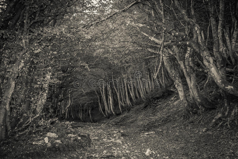 Pathway in the obscure forest royalty free stock images