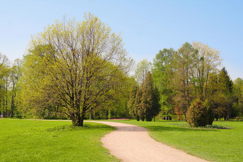 Download Pathway in the park stock image. Image of park, bush - 25456151