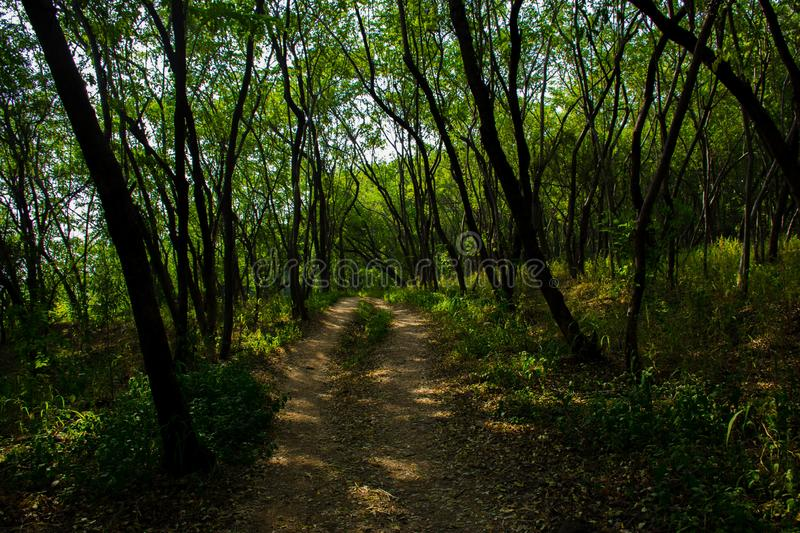 Pathway passing through the forest of Vetal Hill, situated in Pune royalty free stock images