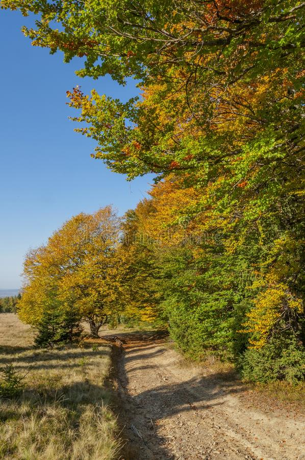 Pathway passing near colorful autumn forest in the sunset time stock photos