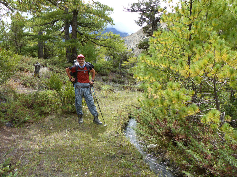 Pathway through pine forest. Annapurna Circuit trek in Nepal, near Bhraka village royalty free stock photo