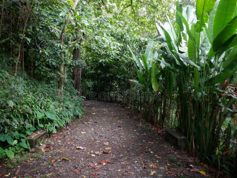 Pathway with plants and trees royalty free stock photography