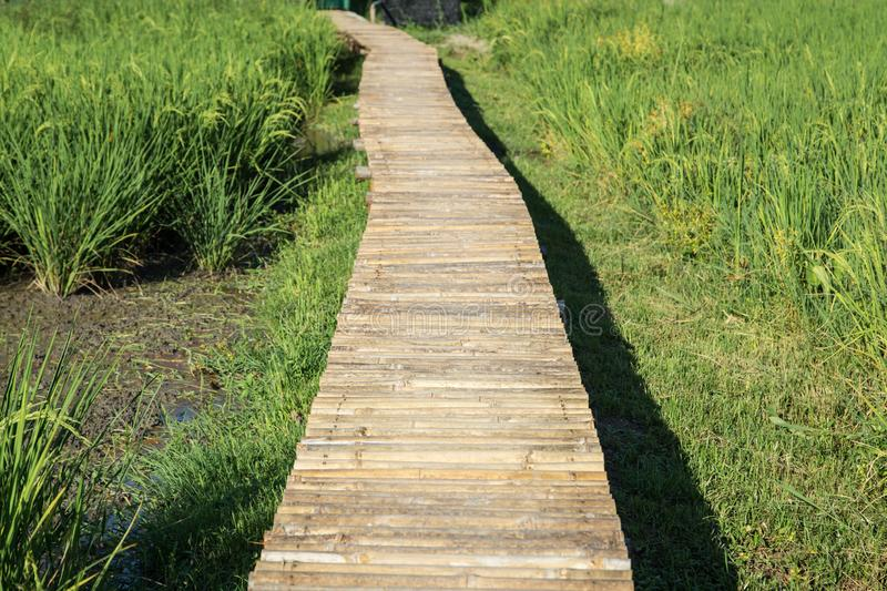 Pathway on the rice field stock photo