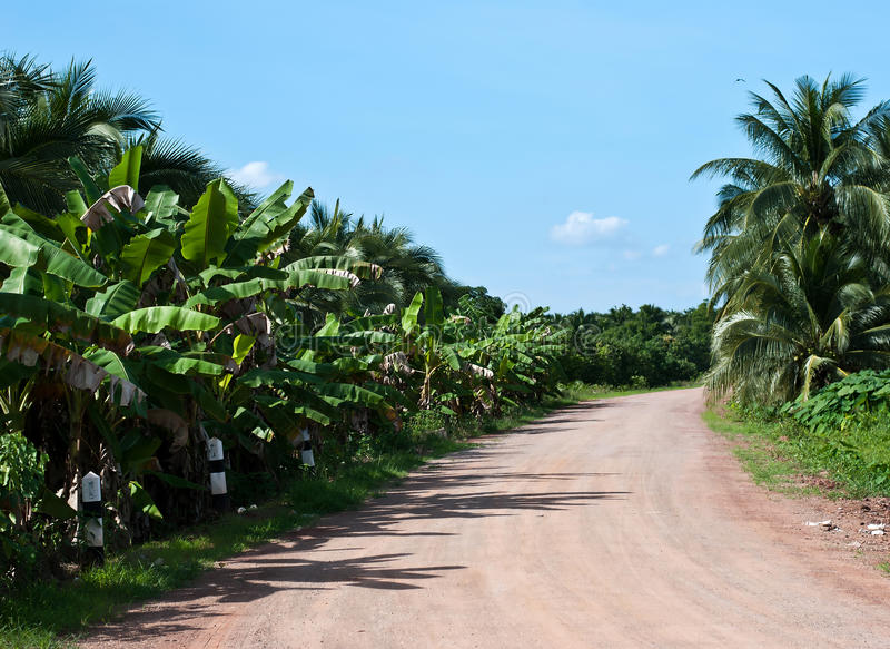 Pathway road in the rural