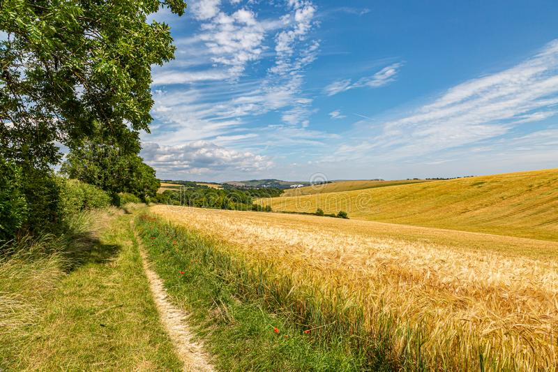 A Pathway in the South Downs. A pathway alongside farmland on the South Downs Way in Sussex, on a sunny summers day stock photos