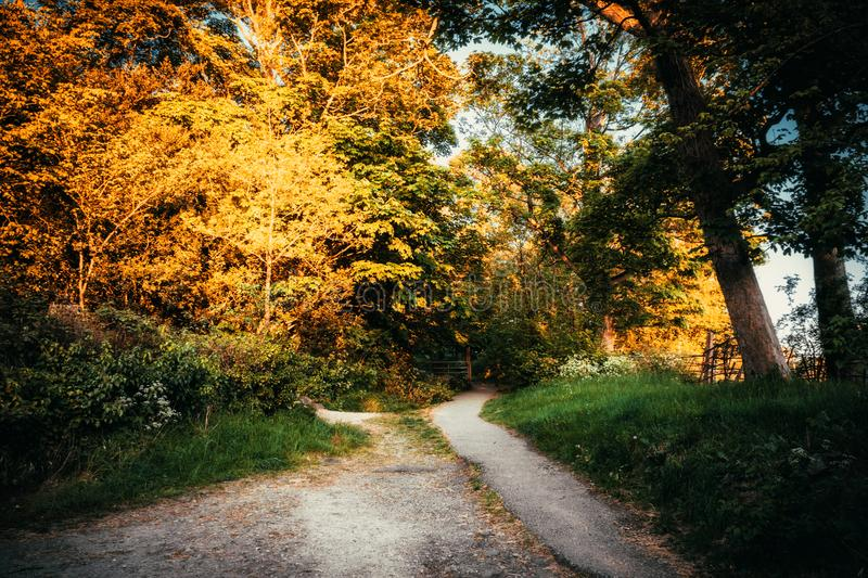 Pathway Surrounded by Trees stock images