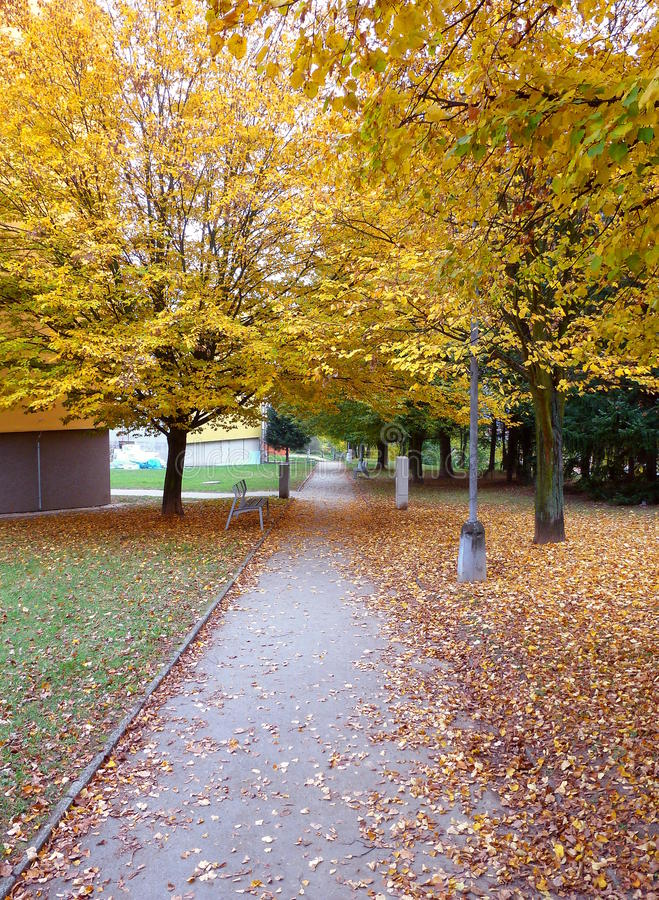 Pathway surrounded by trees with yellow leaves. Photo of a pathway surrounded by trees with yellow leaves stock photography