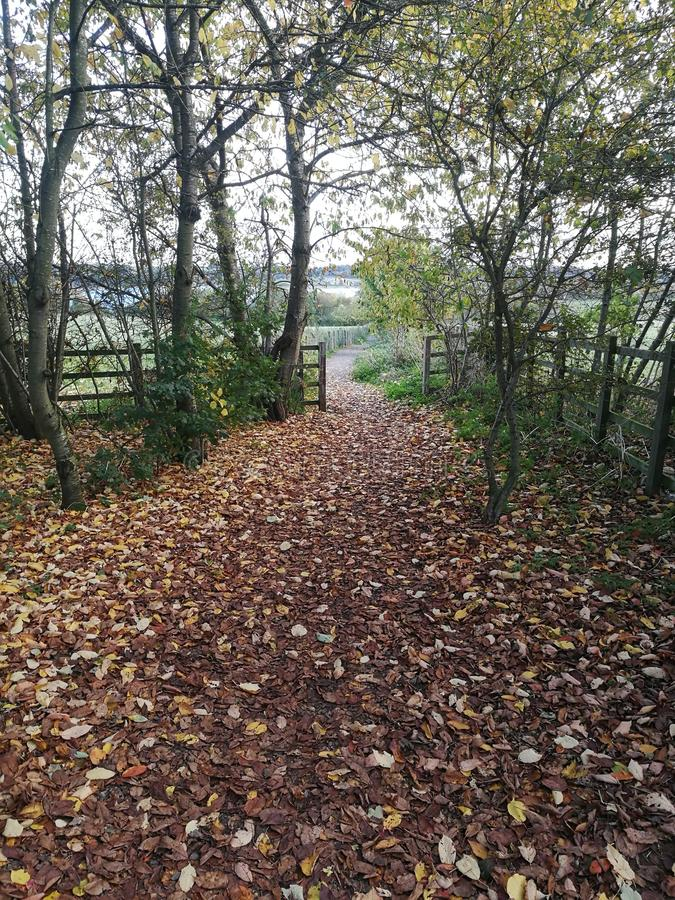 Pathway to Brixworth Country Park in Autumn stock photo