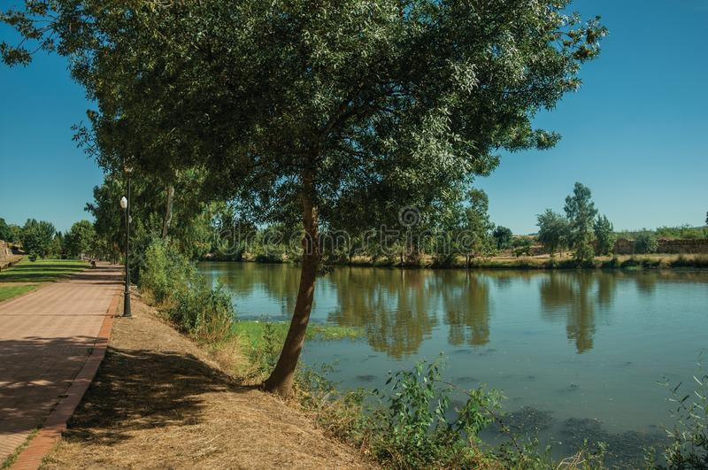 Pathway and tree next to the Guadiana River at Merida royalty free stock photo