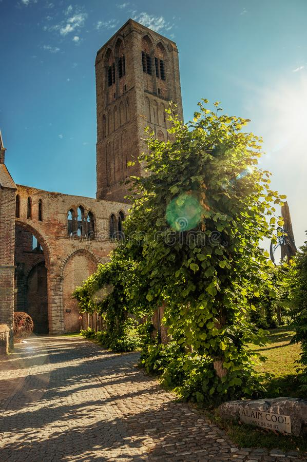 Pathway with trees in garden of medieval church ruins, in the late afternoon sunlight at Damme. royalty free stock photography
