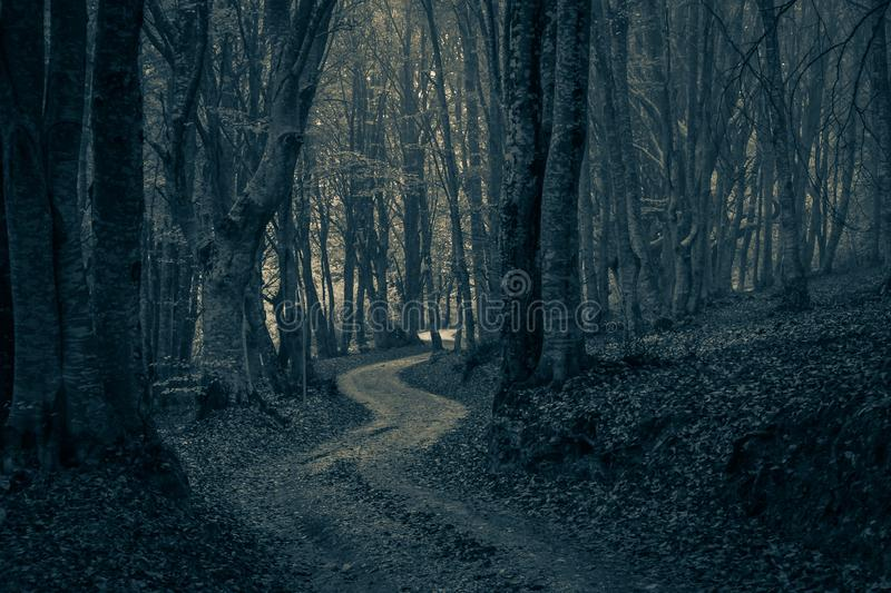 A pathway between trees leading into a dark and misty forest. Transylvania royalty free stock image