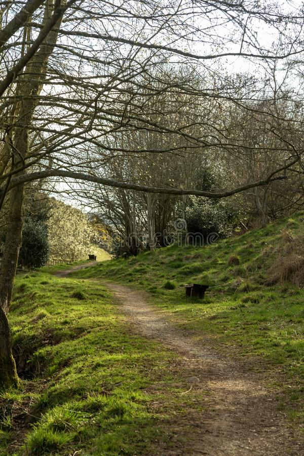 Pathway into the trees. Scotland stock images