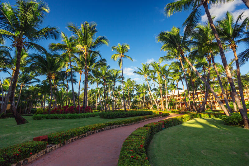 Pathway and tropical garden in beach resort, Punta Cana royalty free stock images