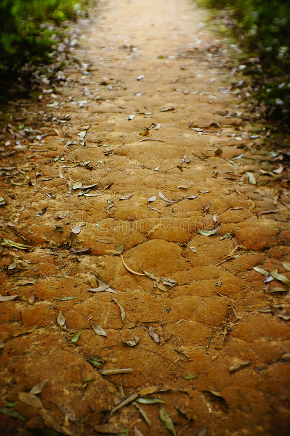 The pathway among the woods. Red soil royalty free stock photos