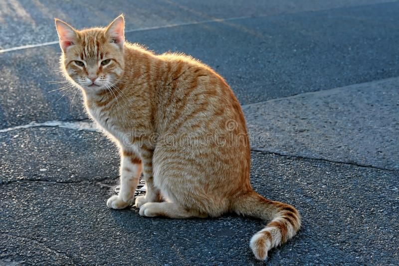 Patient cat. A cat sitting on a street with patience royalty free stock images