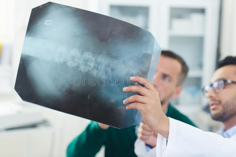 Spinal x-ray royalty free stock images