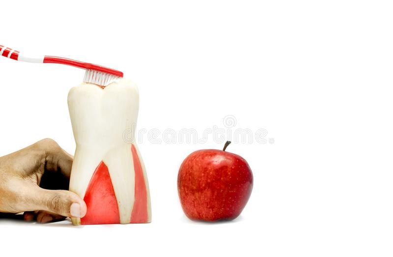 Patientenschulung mit zahnmedizinischem Modell und frischen dem Apfel herein lokalisiert lizenzfreies stockfoto
