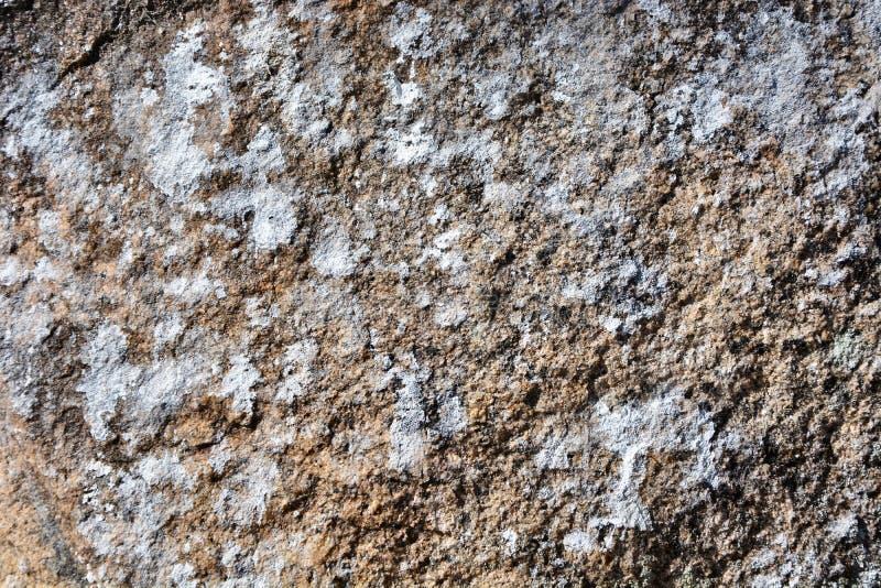 Patina invecchiata e primo piano ricco di struttura della corteccia di albero fotografia stock libera da diritti