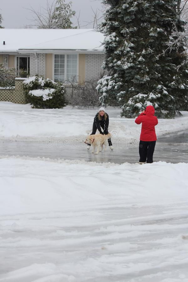 Patinage sur la route glaciale - chien choyant images stock