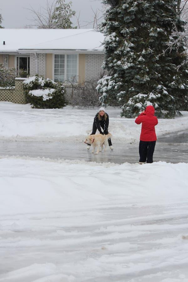 Patinaje en el camino helado - perro que acaricia imagenes de archivo