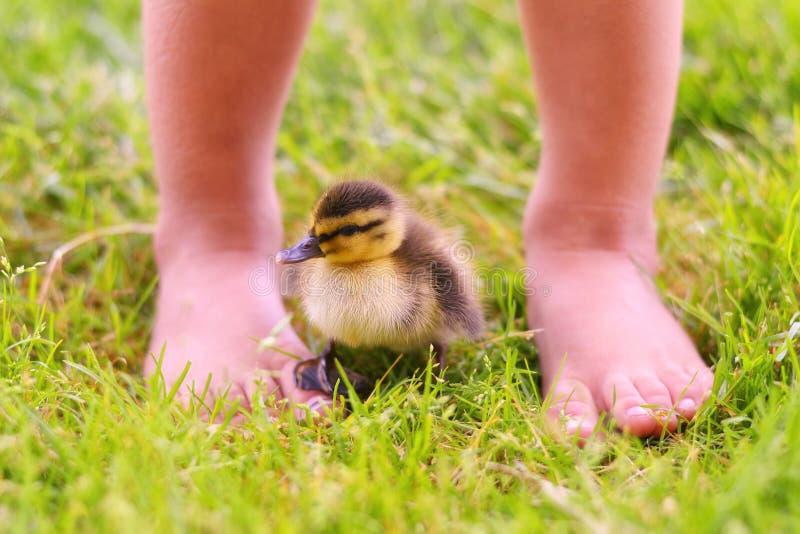 Patinho com pés de Childs fotografia de stock royalty free