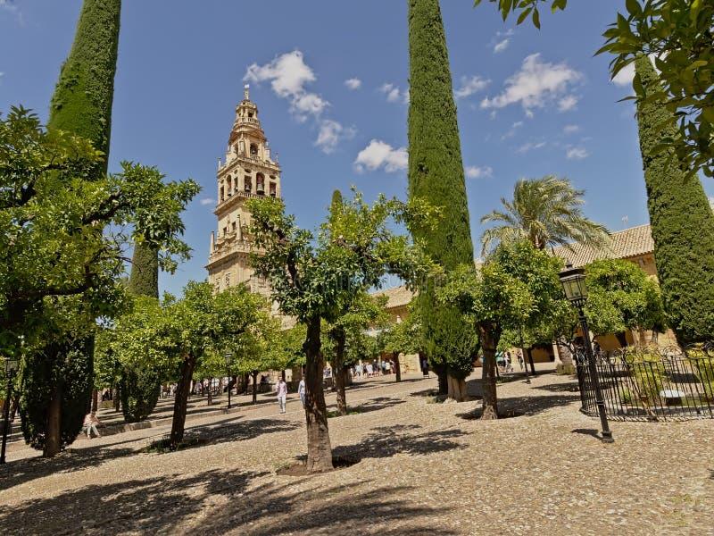 Patio avec les arbres et la tour de cloche de la cathédrale de mosquée de Cordoue image stock