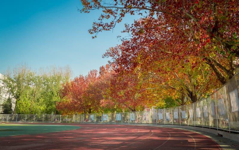 Patio del color de la caída en universidad imagen de archivo