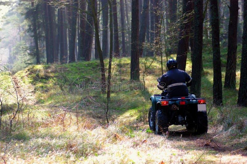 Patio en bosque imagen de archivo