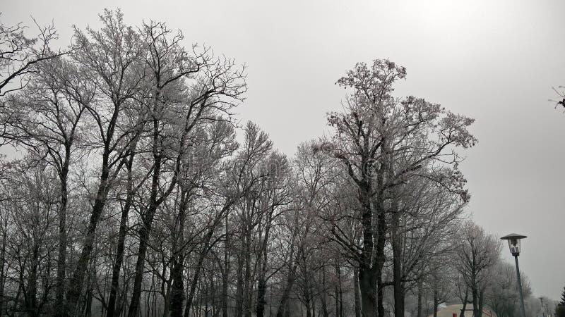 Patio frío escarchado de Austria Florianigasse de la nieve de las calles del invierno fotos de archivo libres de regalías