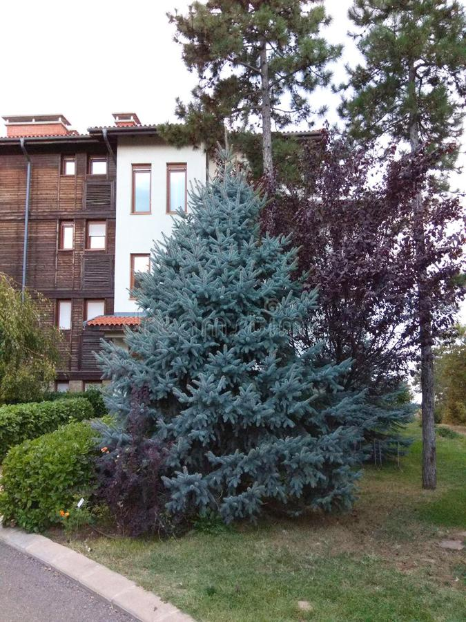 Patio hermoso en área residencial con la hierba del flor, los árboles y los abetos agradables fotografía de archivo